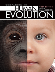 Companion to Human EvolutionSally McBrearty